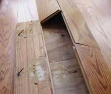 Hardwood Floor Water Damage Repair In Tampa Fl